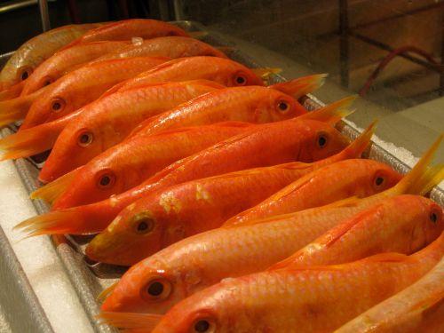 Red Mullet, My Favorite Fish   Erica De Mane