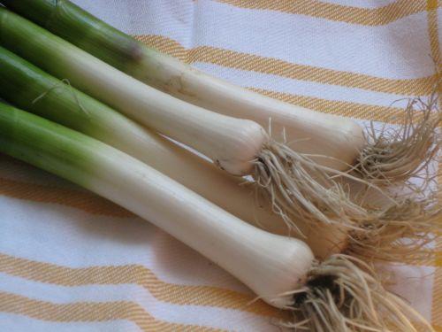 spring garlic