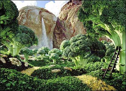 _44354227_broccoli_416x300jpg