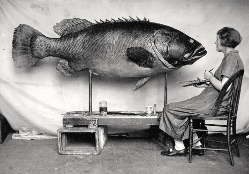 woman & big fish