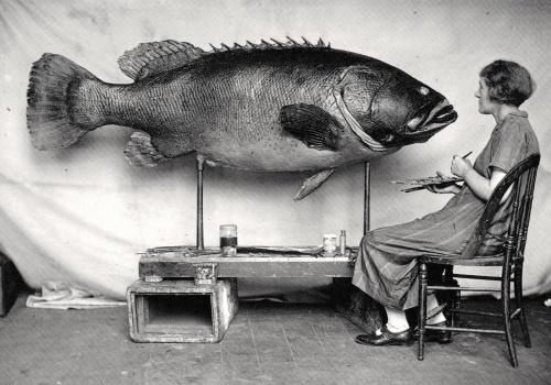 woman & big fish