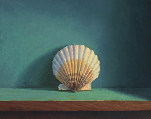 scallop shell  1