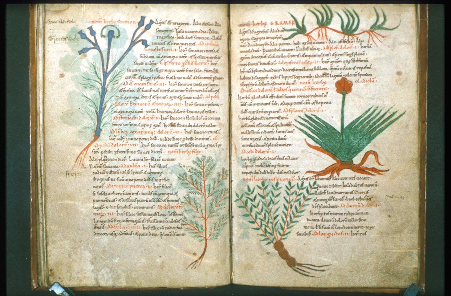 антона древние травники лечебники картинки брюэр является также