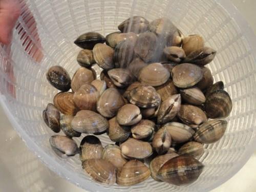 clams 009