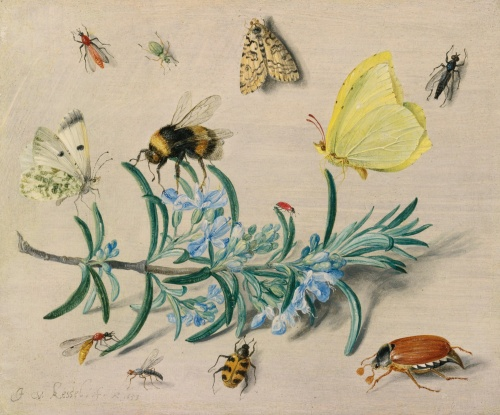Jan_van_Kessel_(I)_-_A_still_life_study_of_insects_on_a_sprig_of_rosemary_with_butterflies,_a_bumble_bee,_beetles_and_other_insects